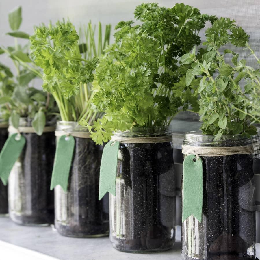 Mini horta aromatica